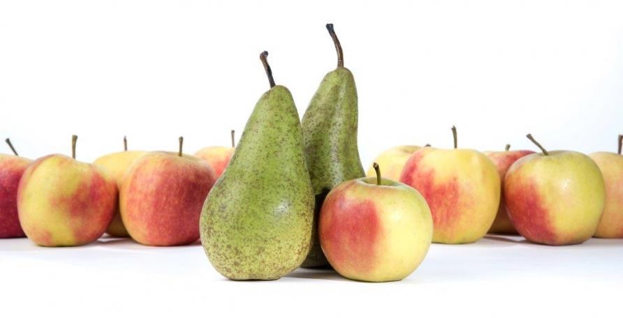 Export fruit